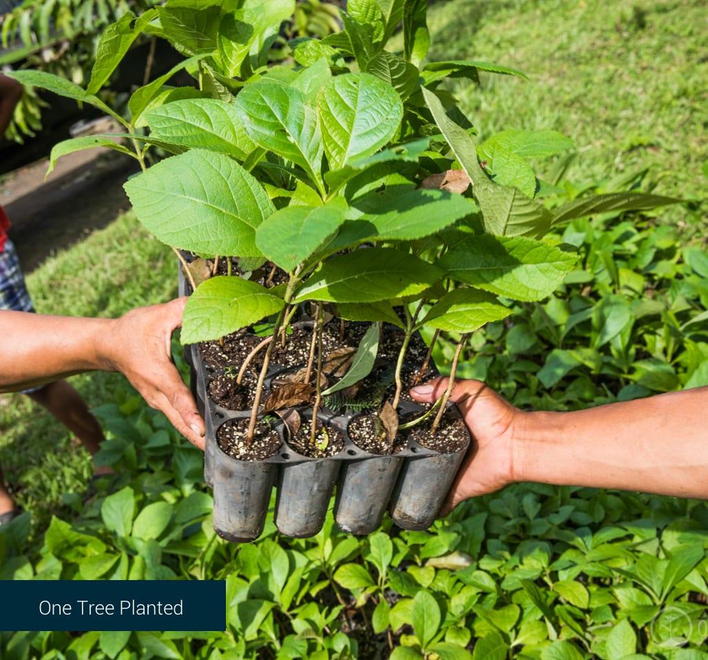 One Tree Planted Non Profit.